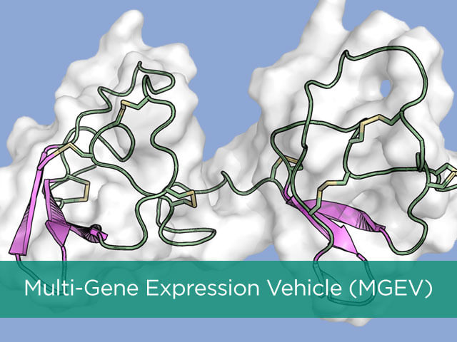Multi-Gene Expression Vehicle (MGEV)